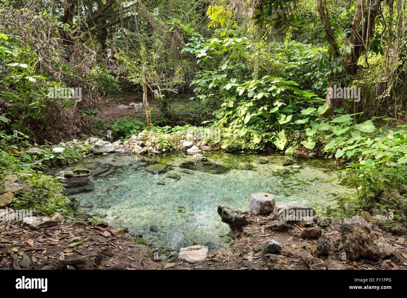 Spring with water, Arroyo de la Boza Azul, Apazapan, Veracruz, Mexico - Stock Image