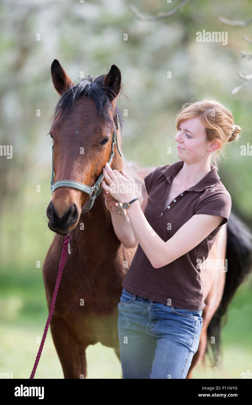 American Quarter Horse Woman putting halter yooung horse Sequence 5 5 - Stock Image