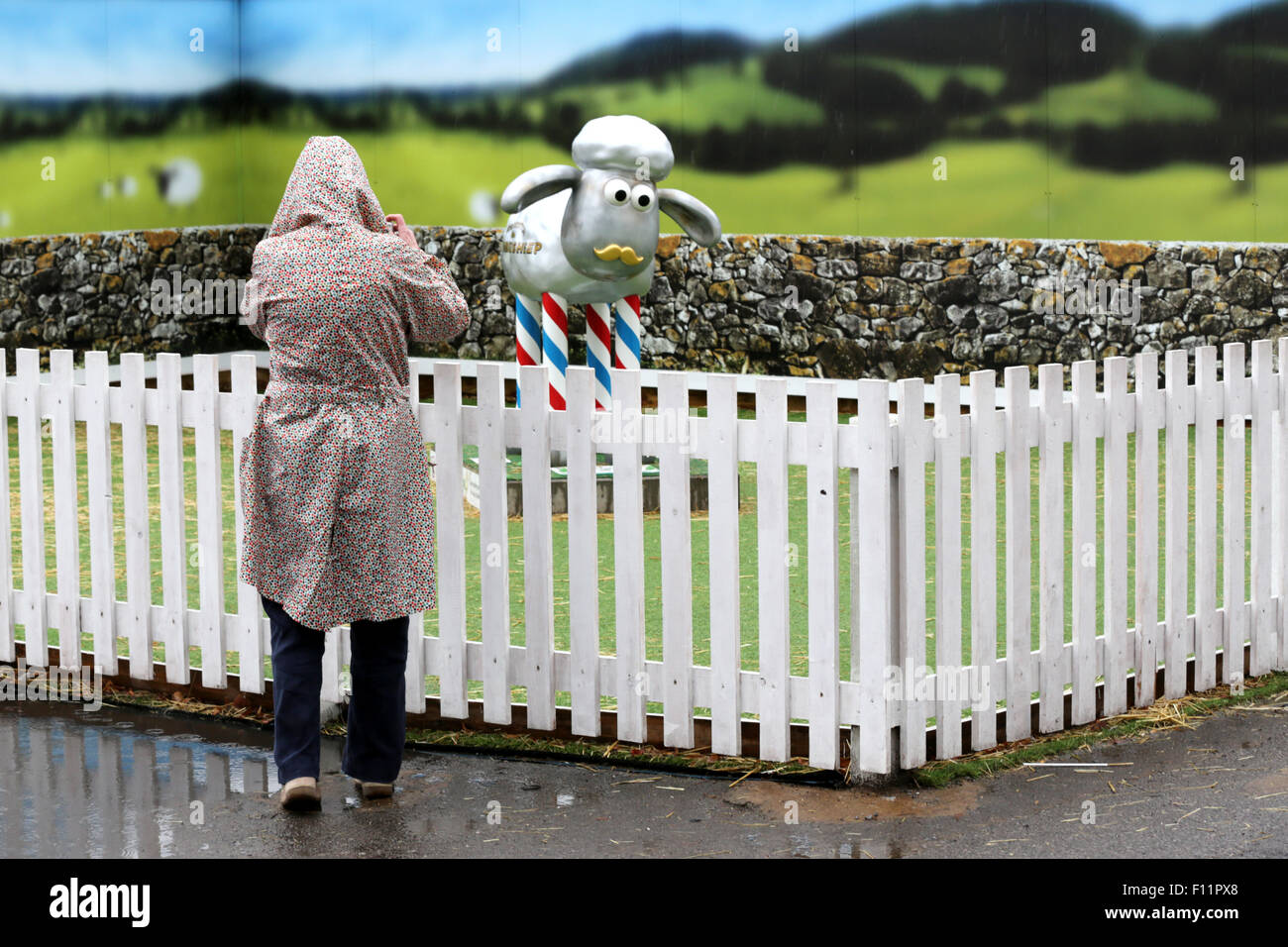 Undeterred by the rain a visitor takes a picture, with her phone, of a Shaun the Sheep character.  Bristol Shaun - Stock Image