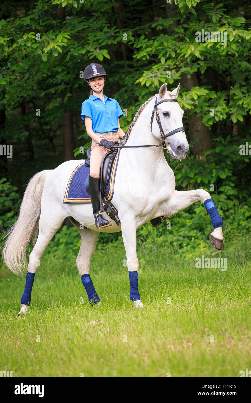 Lusitano Rider gray horse performing the Spanish walk Austria - Stock Image