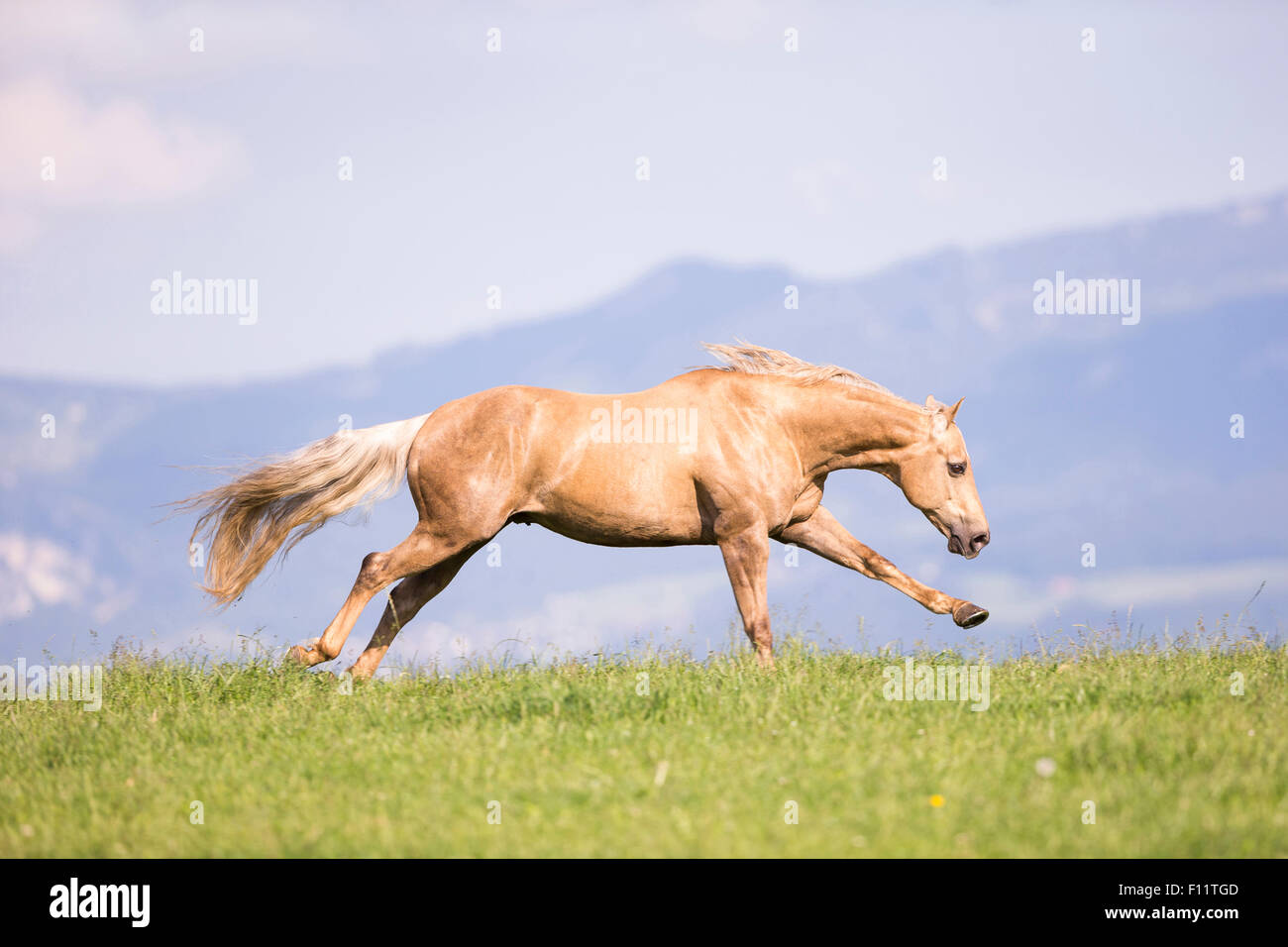 history of the horse equus caballus essay Equus caballus : (n) a large solid-hoofed herbivorous ungulate mammal domesticated since prehistoric times [syn: horse] horses belong to the equus family equus comes from the ancient greek word meaning quickness.