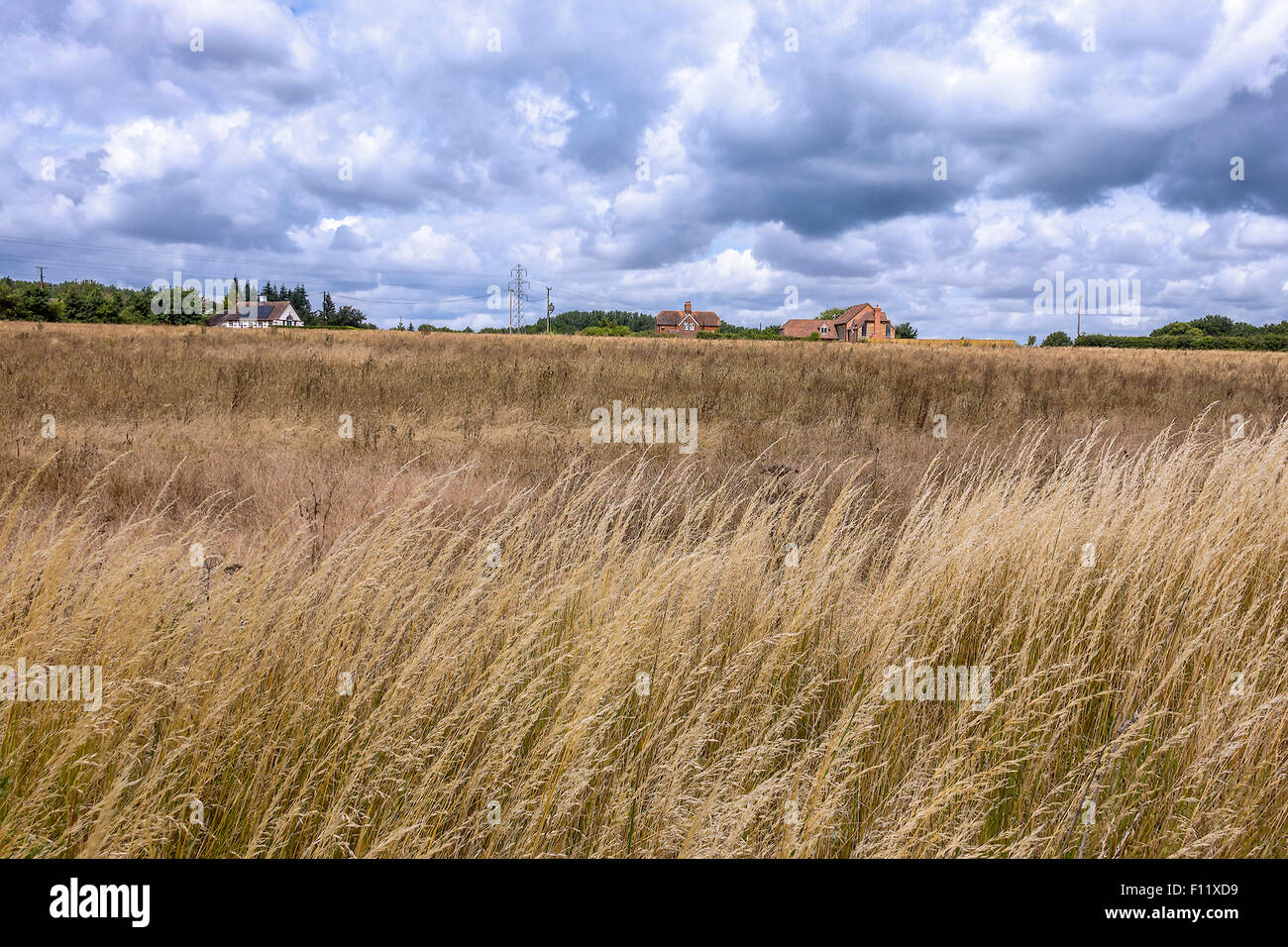 Scorched Fields Waiting For The Rain Berkshire UK - Stock Image
