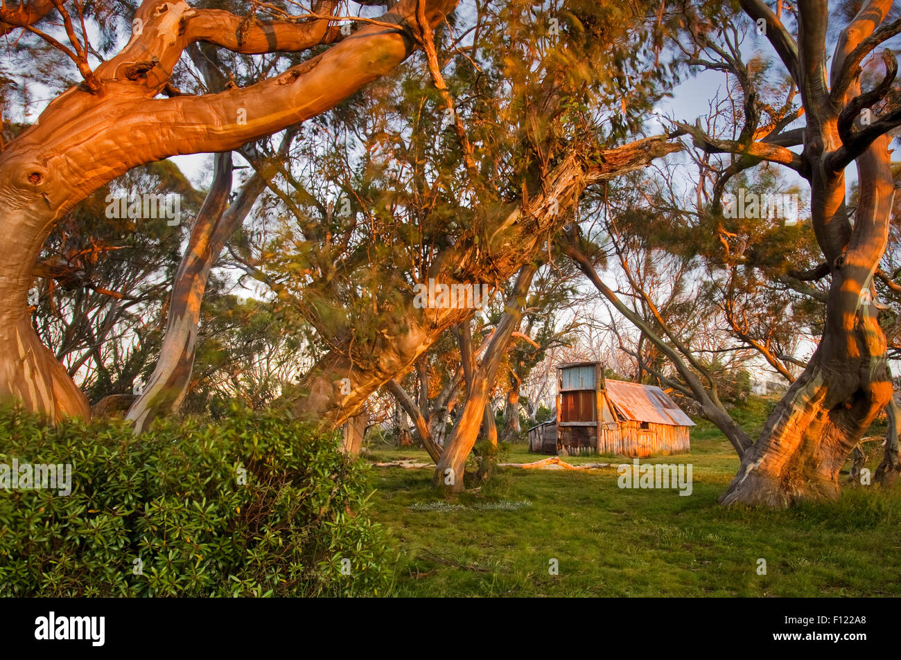 Wallaces Hut in early morning light. - Stock Image