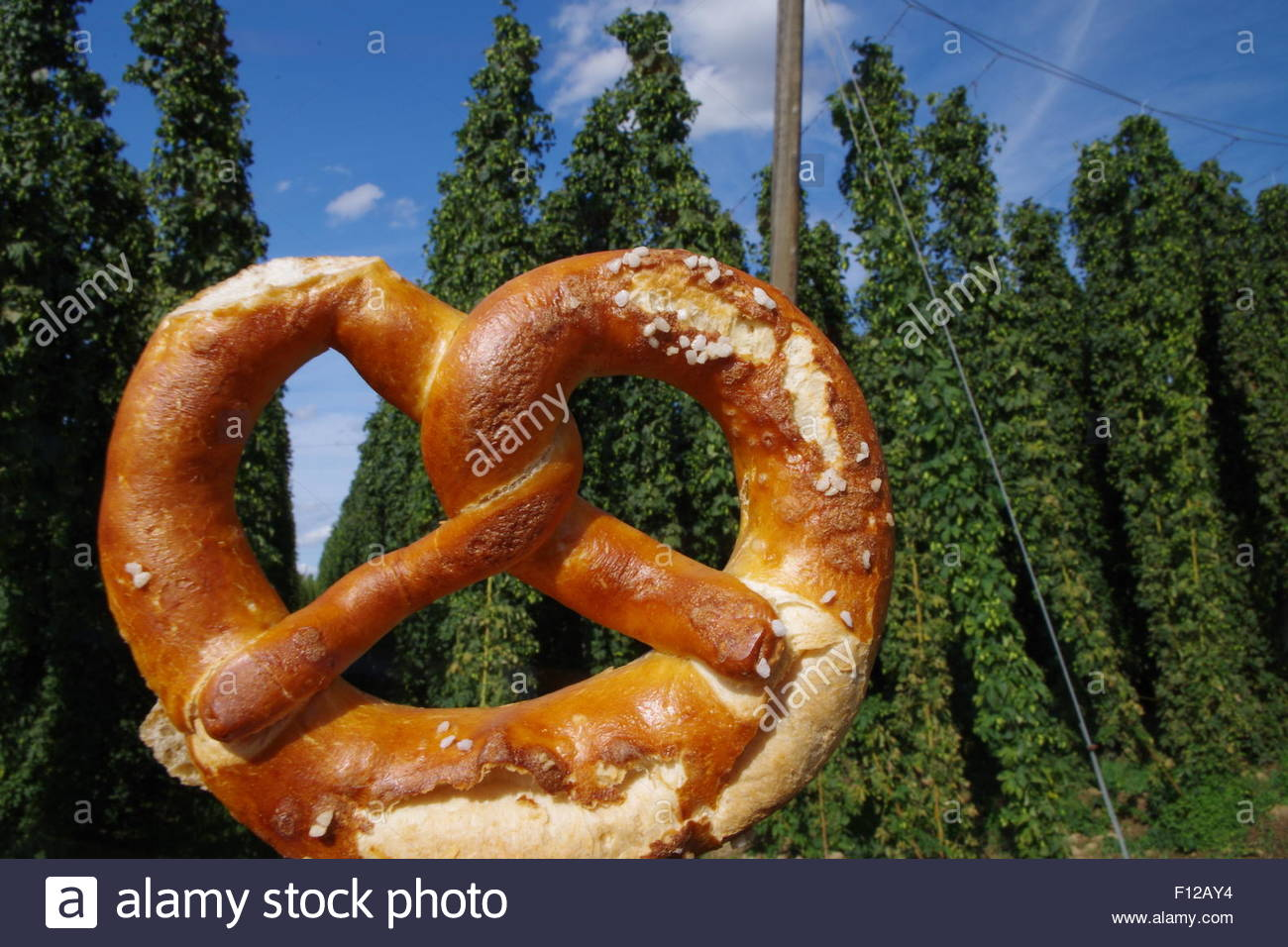Hopfen und  Breze / hop and  pretzel - Stock Image