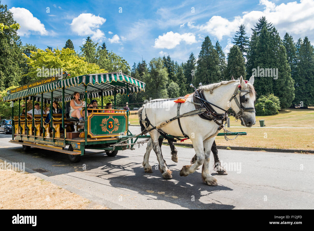 Horse drawn sightseeing carriage Stanley Park, Vancouver, British Columbia, Canada - Stock Image