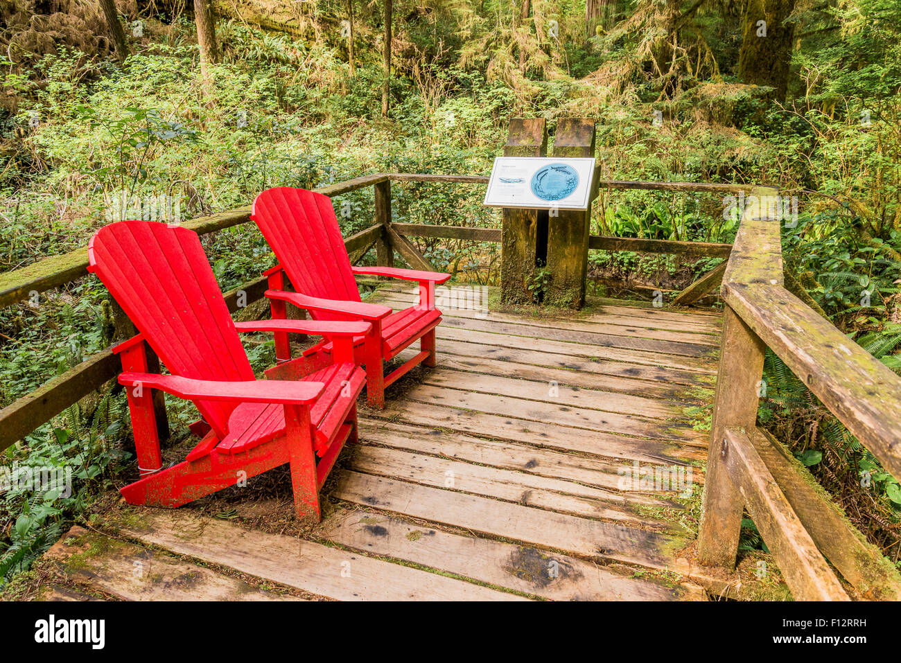 Red adirondack style chairs, Rainforest Trail, Pacific Rim National Park, British Columbia, Canada - Stock Image