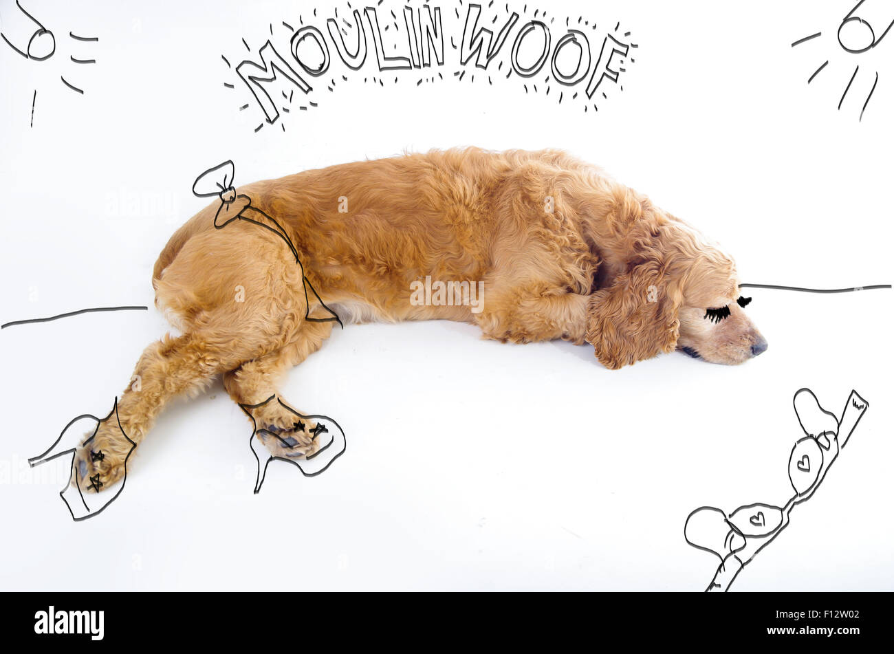 Cute English Cocker Spaniel Puppy In Front Of A White Background With Stock Photo Alamy