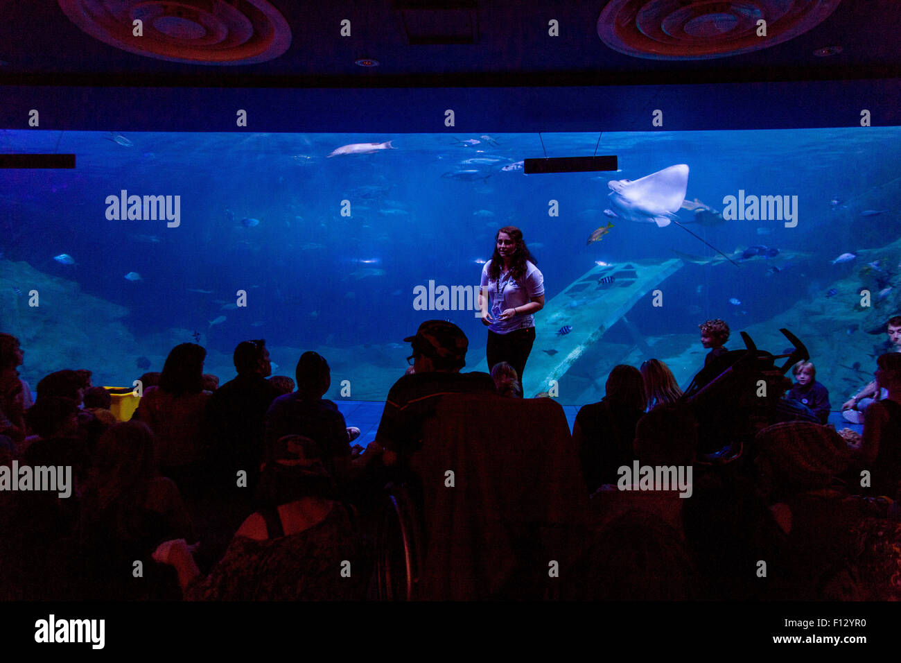 National marine aquarium, Plymouth, Devon, England, United Kingdom. - Stock Image