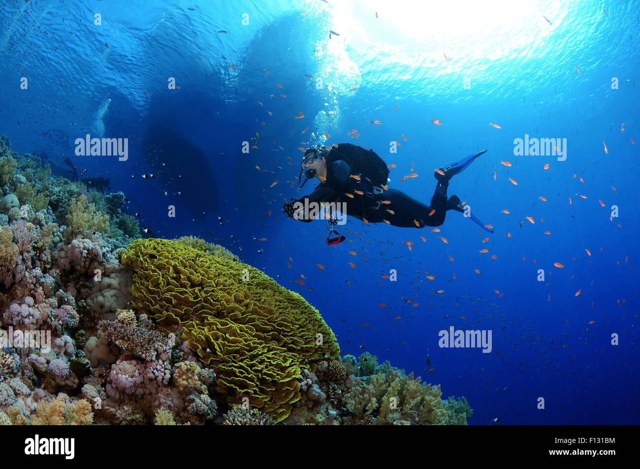Red Sea, Egypt. 15th Oct, 2014. Diver looking at coral reef in Ras Muhammad National Park, Sinai Peninsula, Sharm Stock Photo