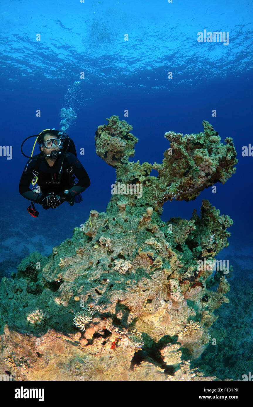 Red Sea, Egypt. 15th Oct, 2014. Diver looks at coral reef, Red Sea, Egypt, Africa © Andrey Nekrasov/ZUMA Wire/ZUMAPRESS.com/Alamy Stock Photo