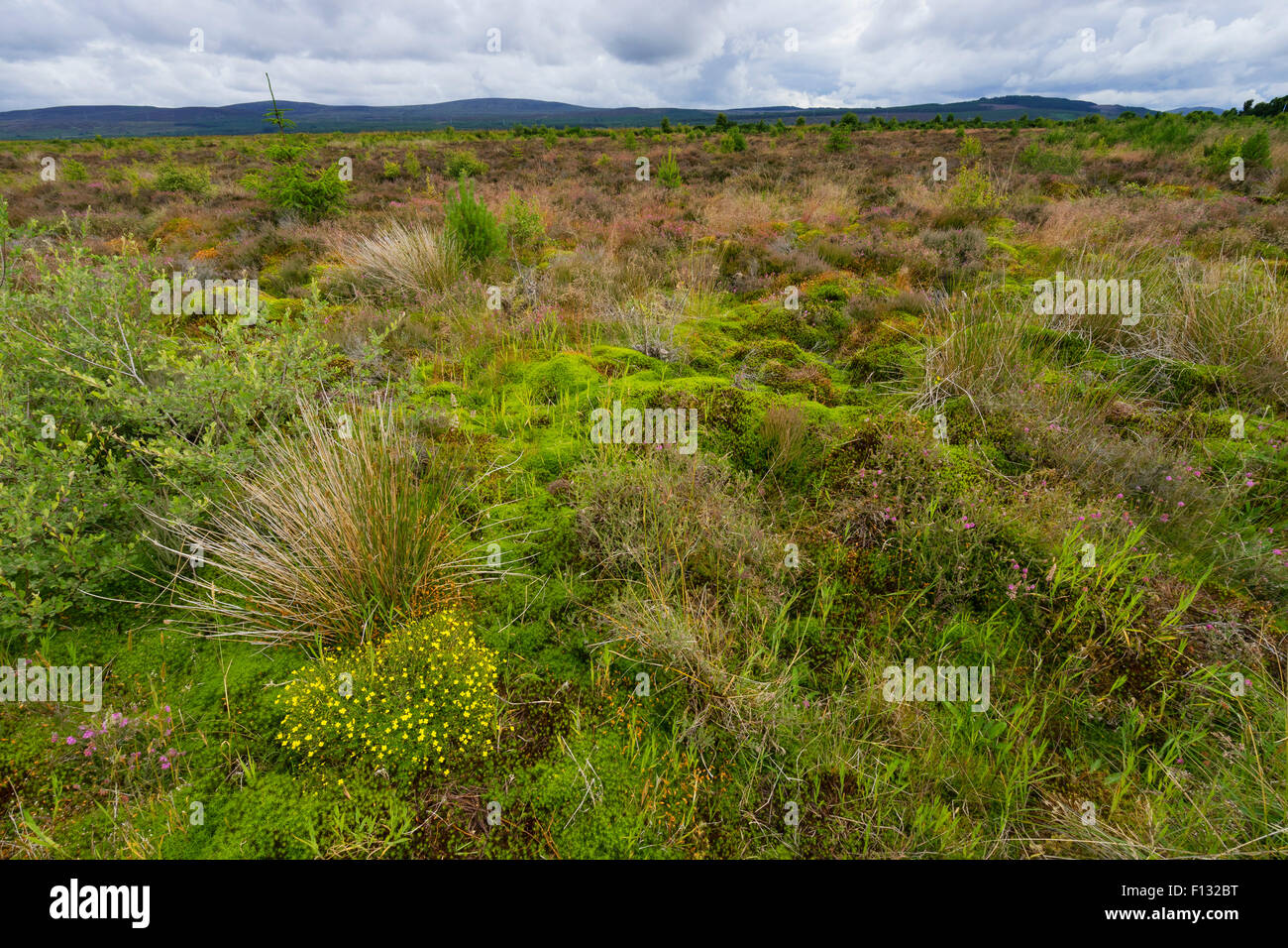 View of natural moorland at Culloden Moor former battlefield in Highland, Scotland - Stock Image