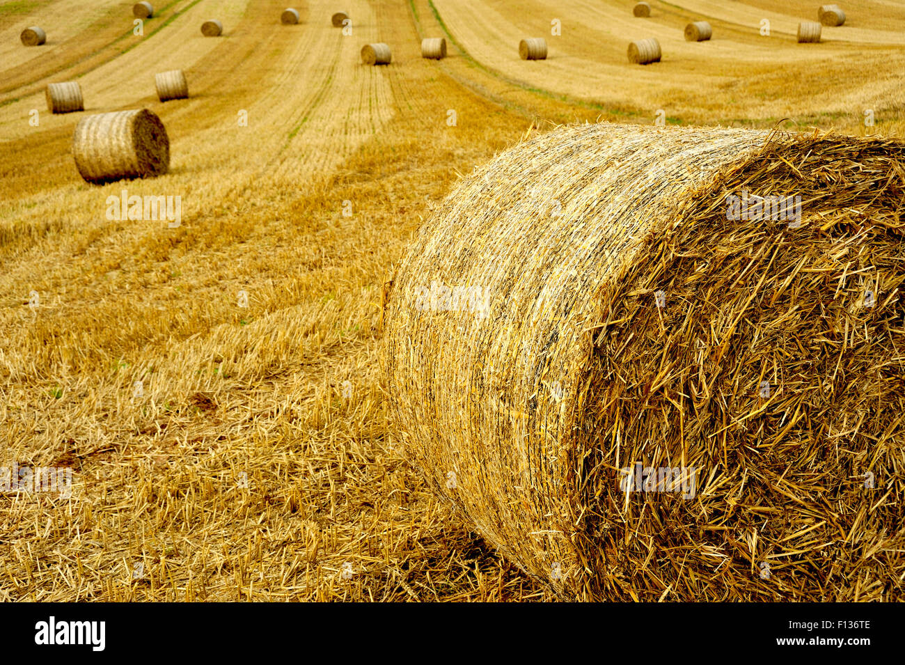 STRAW BALES IN FIELD IN DEVON UK - Stock Image