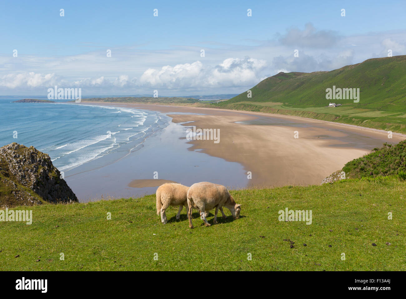Rhossili beach The Gower peninsula South Wales coast with sheep grazing, one of the best beaches in the UK in summer - Stock Image
