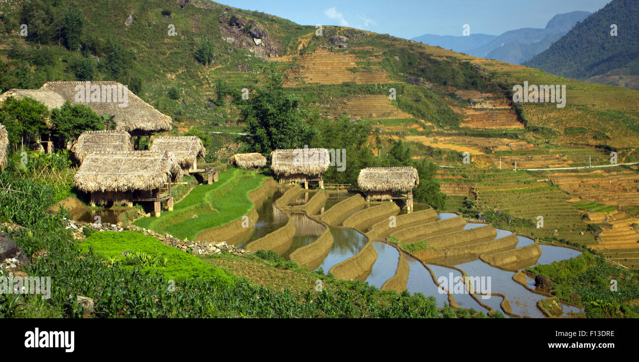 Thatched huts and rice terraces, Sapa, Vietnam - Stock Image