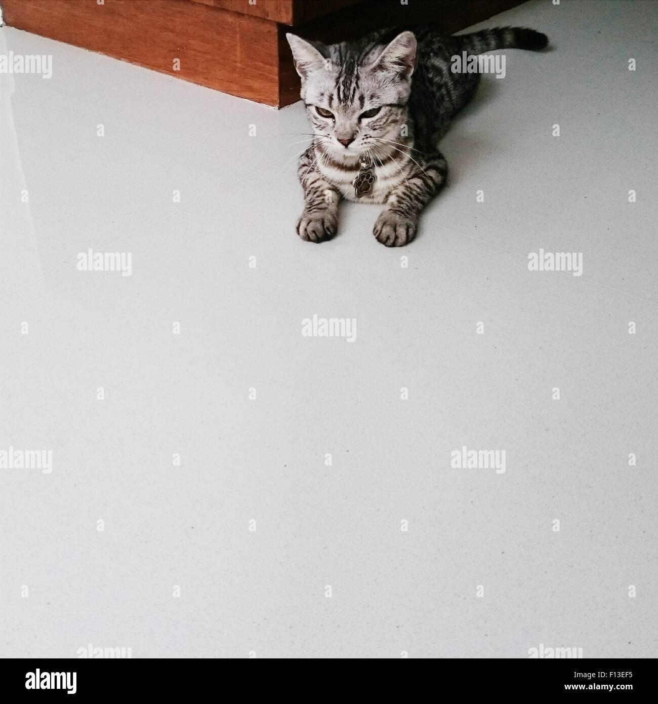 Portrait of a grumpy cat Stock Photo