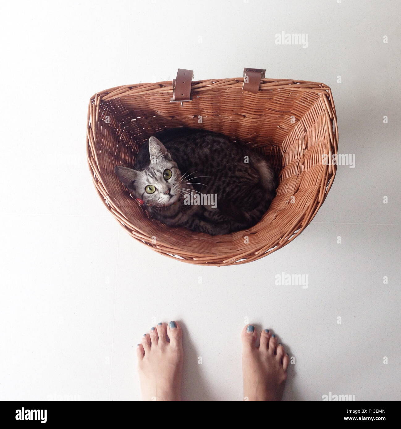 Portrait of human feet and a kitten laying in a bicycle basket Stock Photo