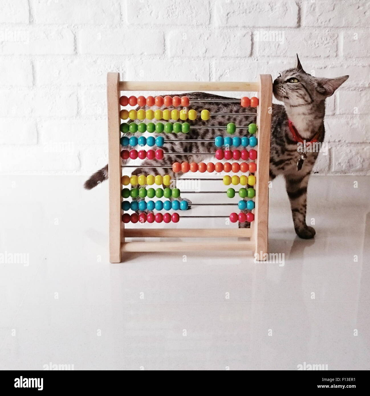 Cat plying with a colorful abacus - Stock Image