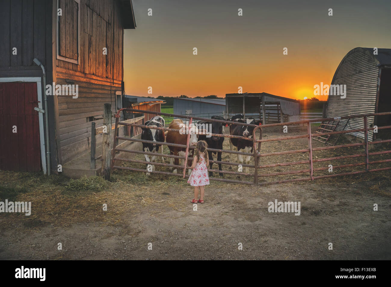 Girl standing in front of a pen with four cows - Stock Image