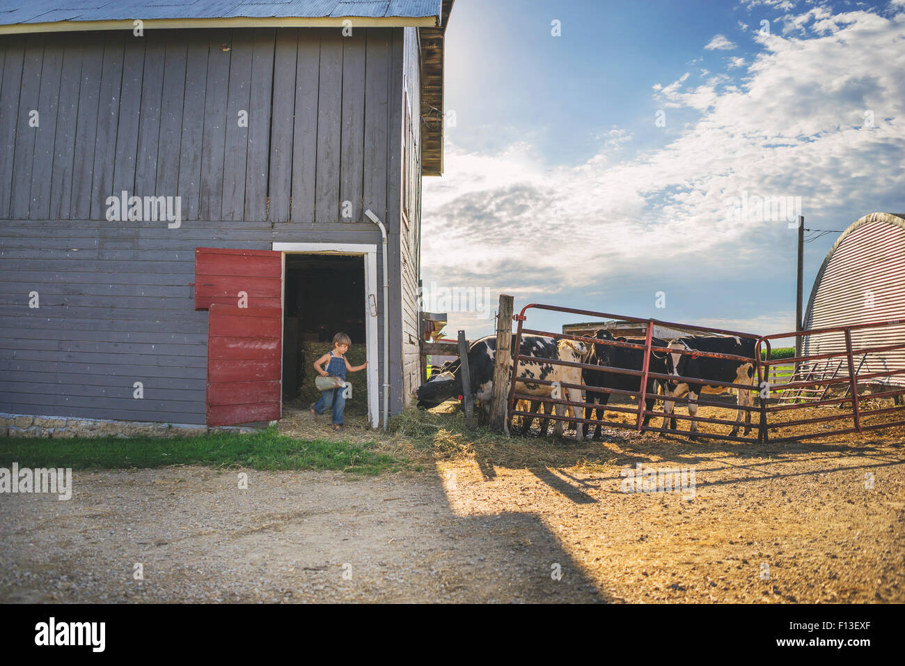 Boy coming out of a barn carrying a milk jug - Stock Image