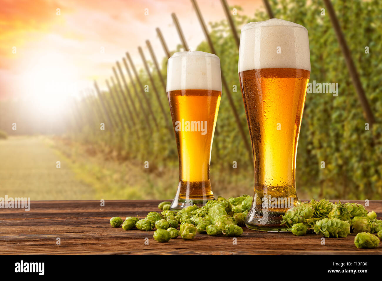 Beer glasses with hop-field on background - Stock Image