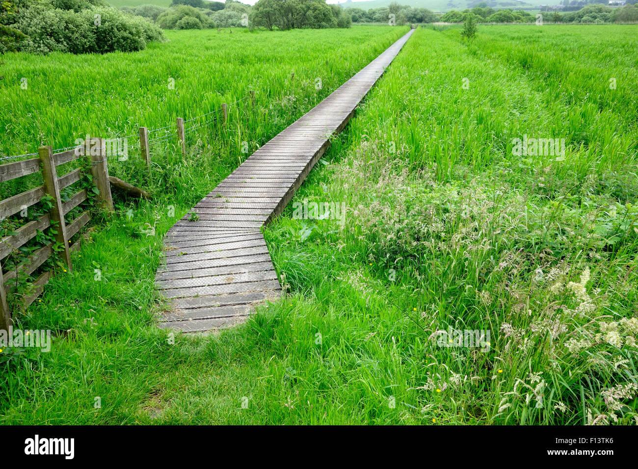 Boardwalk Through Threave & Carlingwark Loch Site of Special Scientific Interest, Castle Douglas, Dumfries & - Stock Image