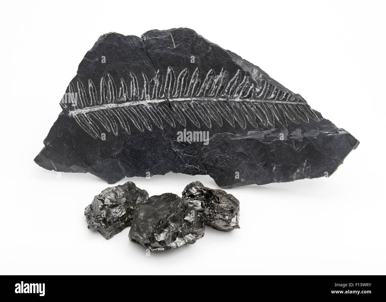 Coal with fern fossil in shale rock - Stock Image