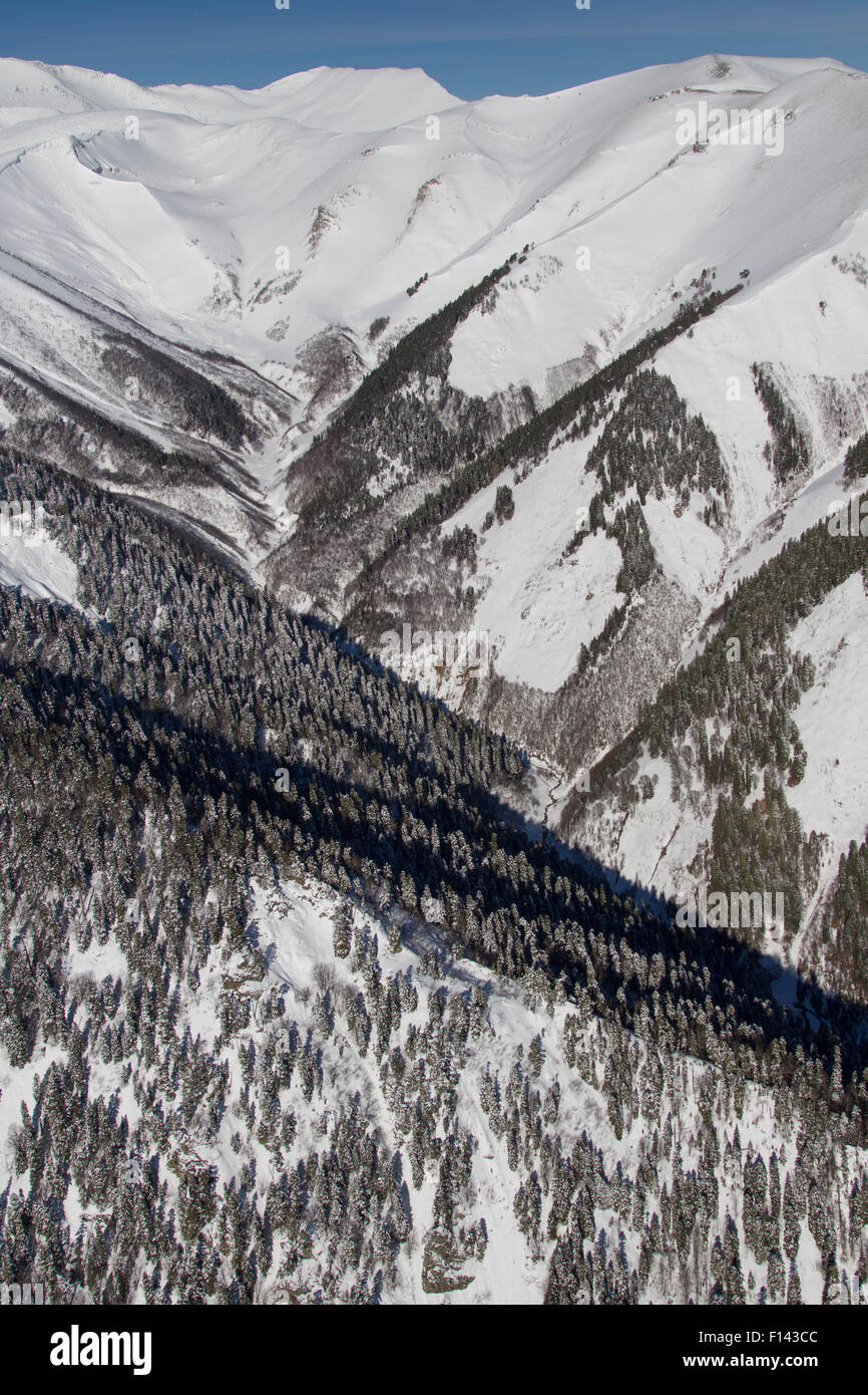 Forest line on Western Caucasus Mountains with Nordmann fir (Abies nordmanniana) near Djuga ridge, Russia, March - Stock Image