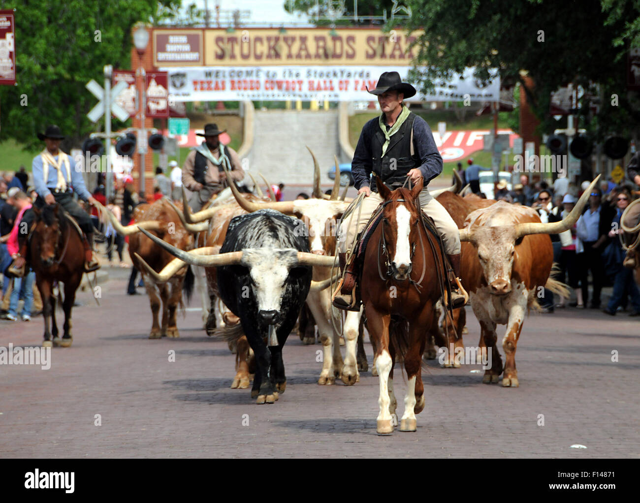 Fort Worth Texas Cattle Drive At Stockyards Stock Photo Alamy