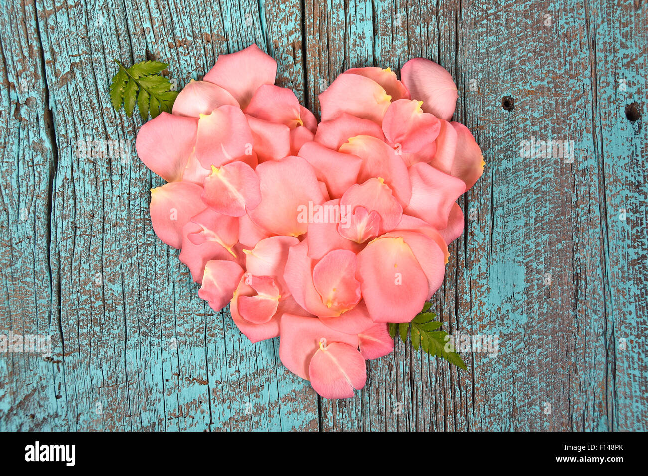 Pink Rose Petals With Fern Leaf In A Heart Shape On Turquoise Painted Rustic Barn Wood