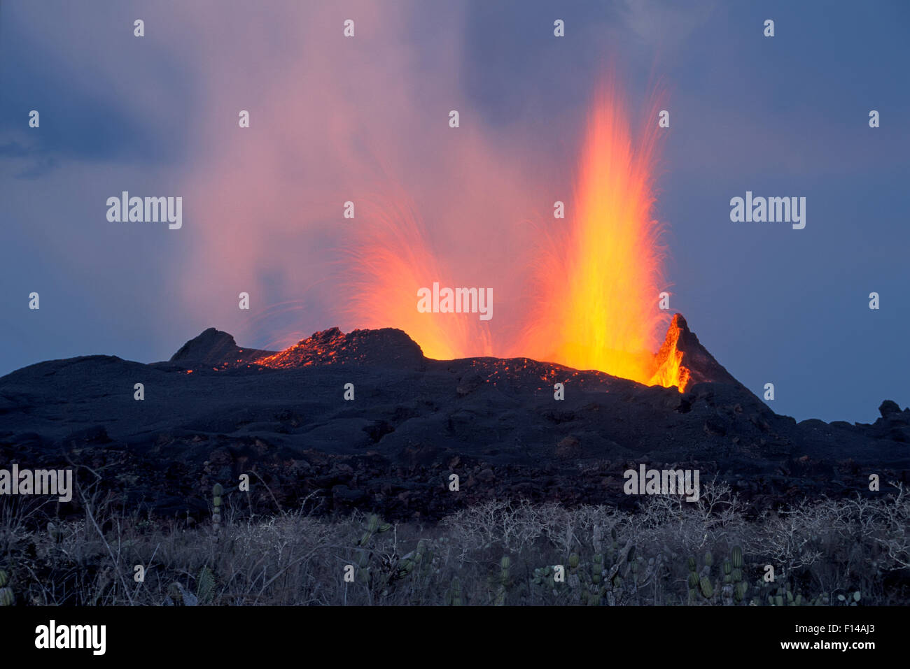 Spatter cone formation and lava fountaining from eruptive vent along radial fissure on flank of shield volcano, - Stock Image