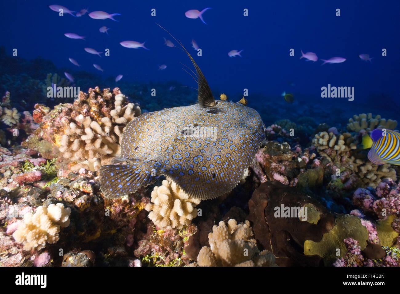 tuamotu/polynésie francaise/ - Stock Image
