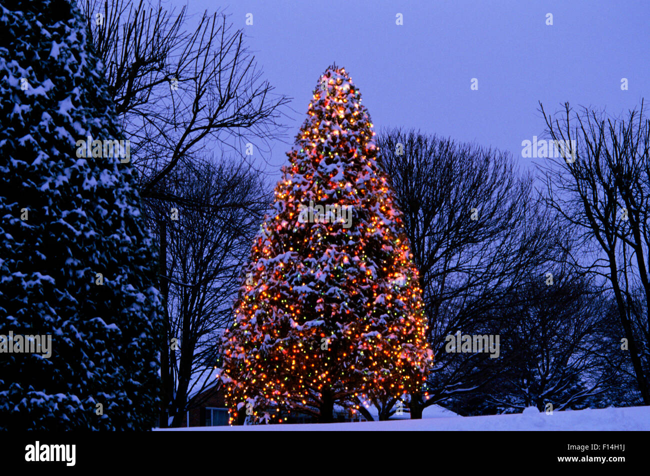 Lighted Outdoor Christmas Tree At Night Stock Photo