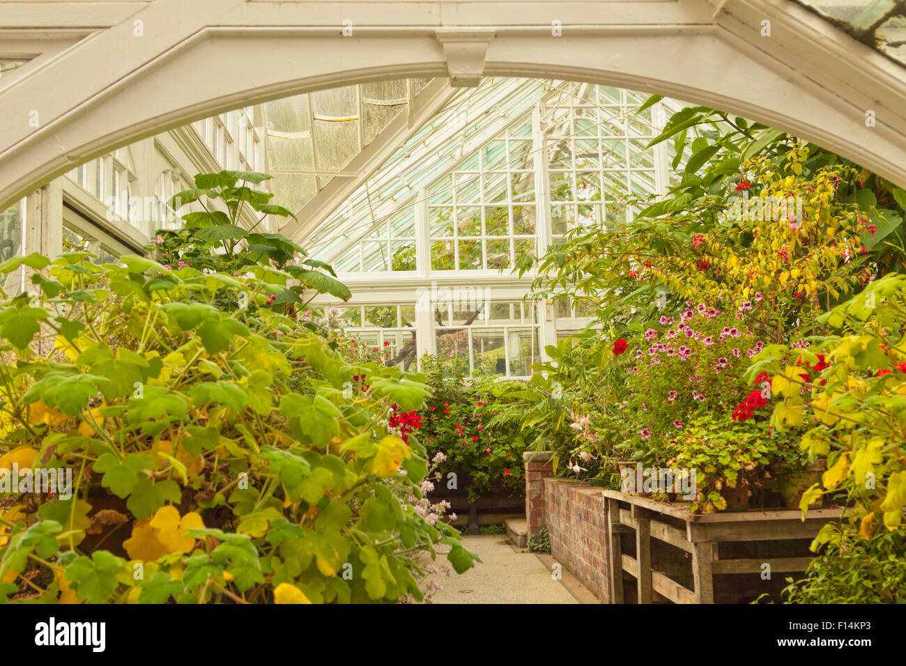 Historic greenhouse at Hergest Croft Gardens, near Kington in Herefordshire, England, Great Britain, United Kingdom. - Stock Image