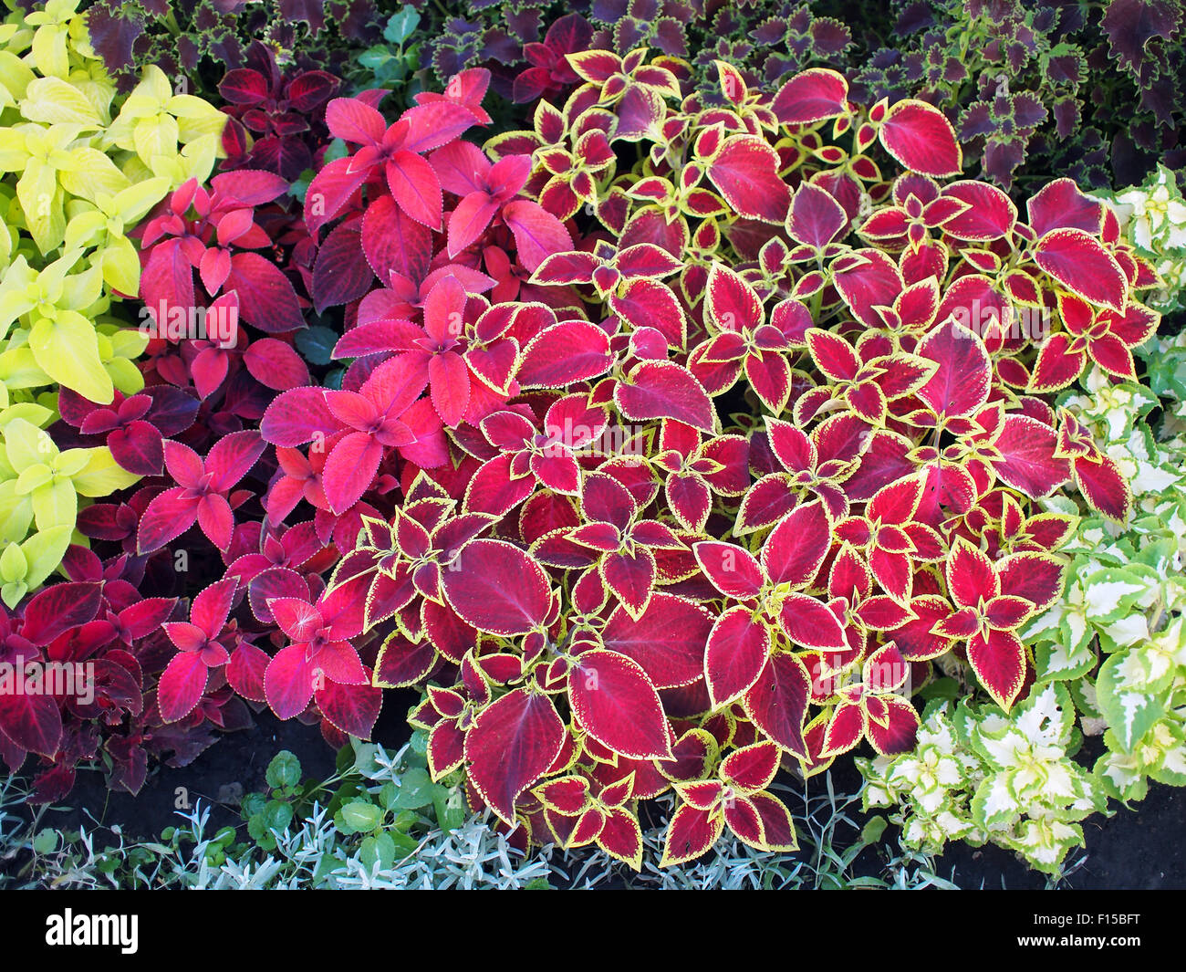 Top view of multicolored and colorful flower bed with different ...
