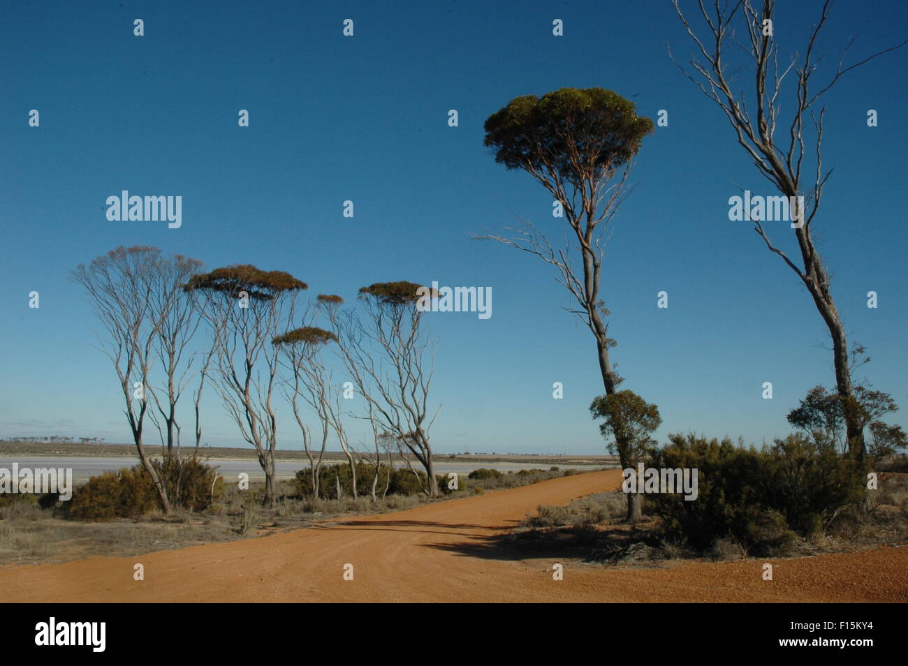 Western Australia Outback, Highway, Hyden to Albany - Stock Image