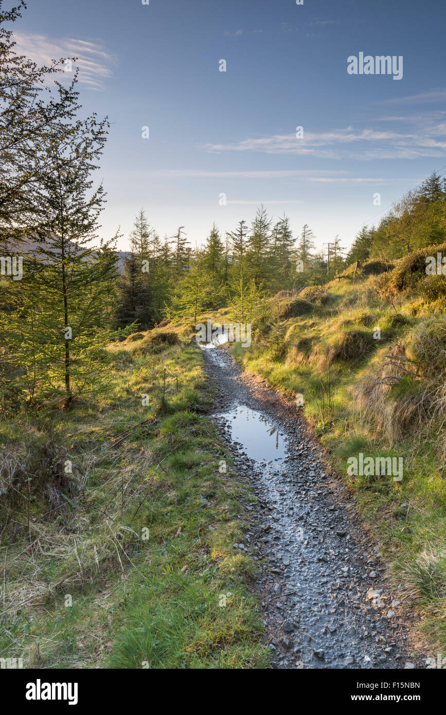 Mountain bike trails in Grizedale Forest, English Lake District national park, UK - Stock Image