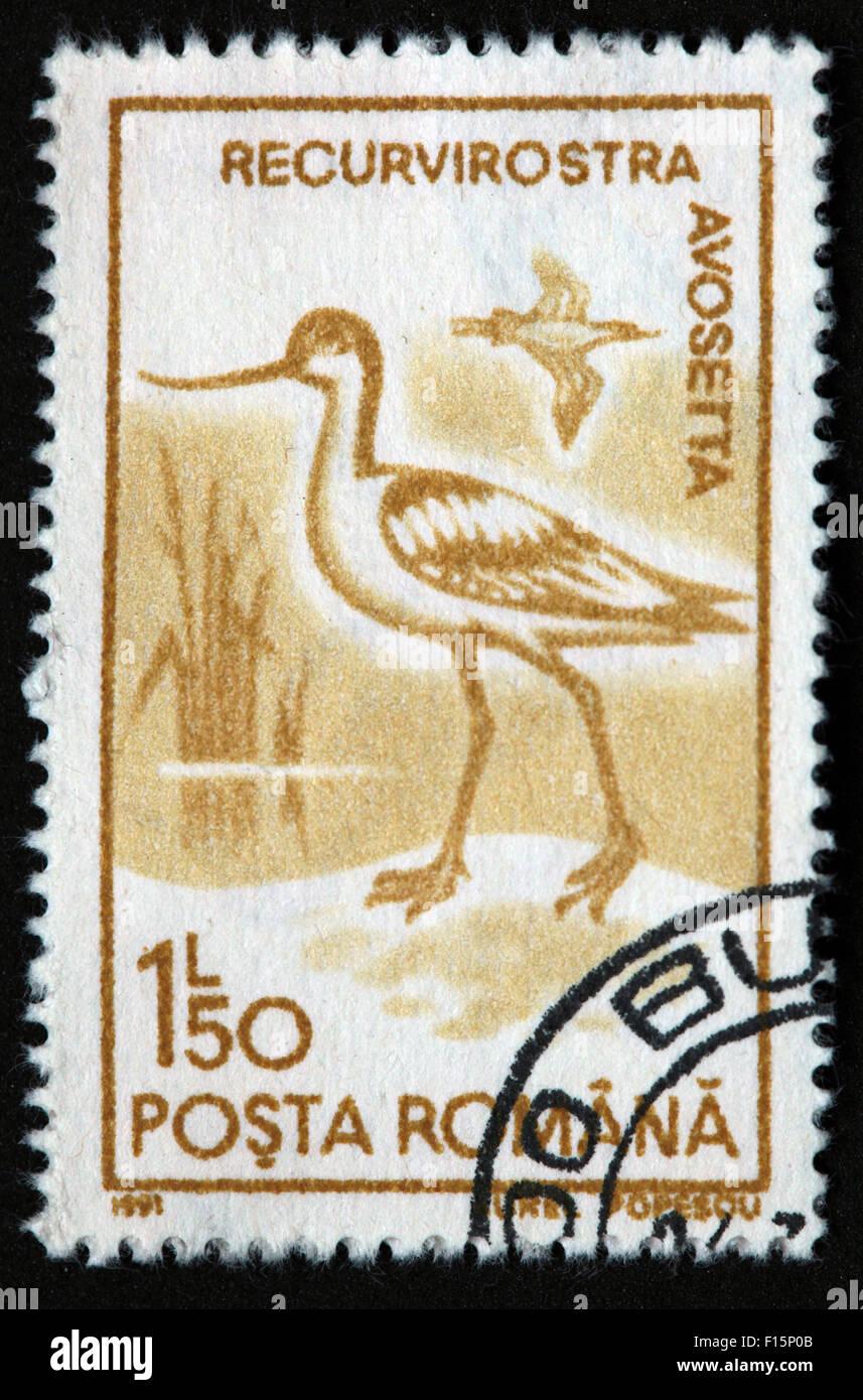 1991 Posta Romana 1l50 Recurvirostra Avosetta  bird Egret Aurel Popescu brown Stamp - Stock Image