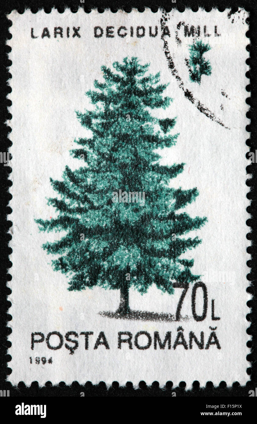 1994 Posta Romana tree 70L Larix Decidua Mill pine Stamp Stock Photo