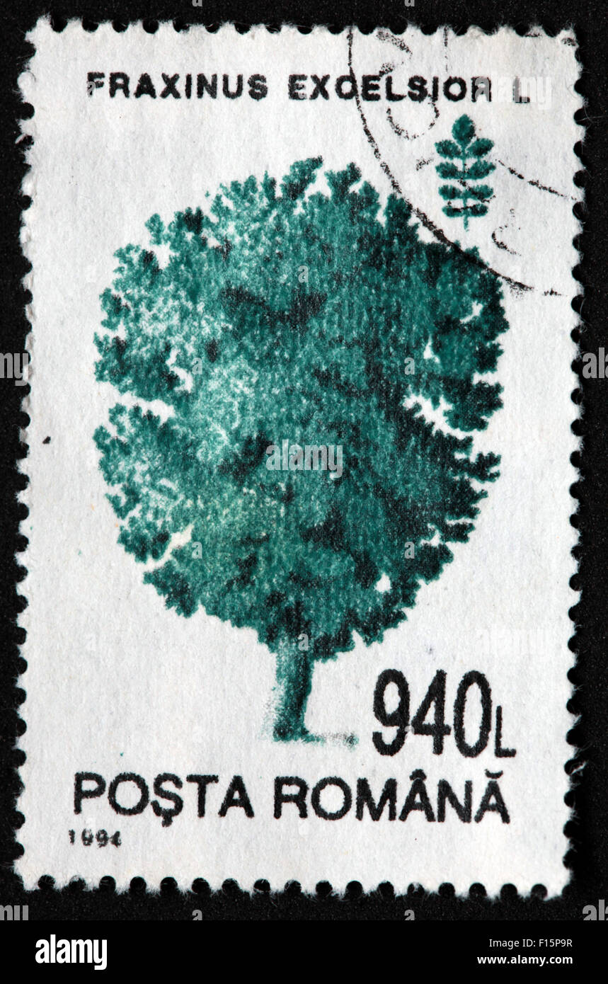 1994 Posta Romana tree 940L Fraxinus Excelsior L pine Stamp - Stock Image