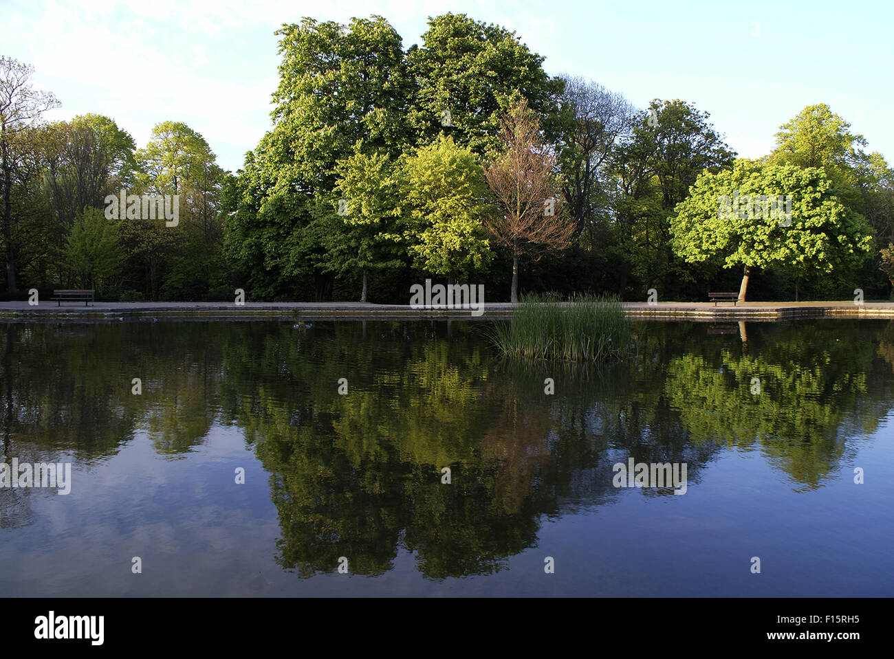 Reflection of trees on a small lake in Radnor Park, Folkestone, Kent - Stock Image