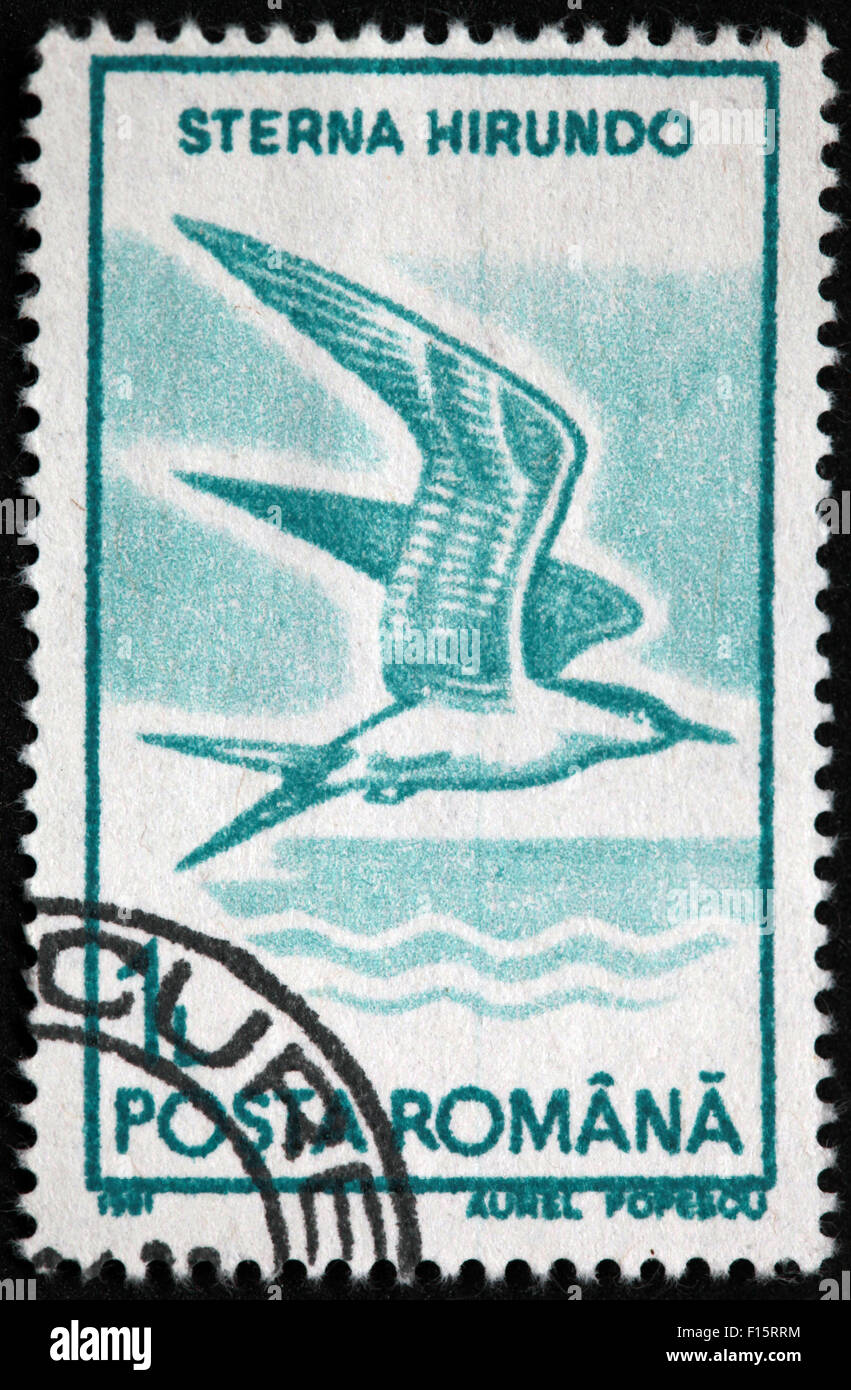 Sterna Hirundo Bird Posta Romana Aurel Popescu stamp - Stock Image