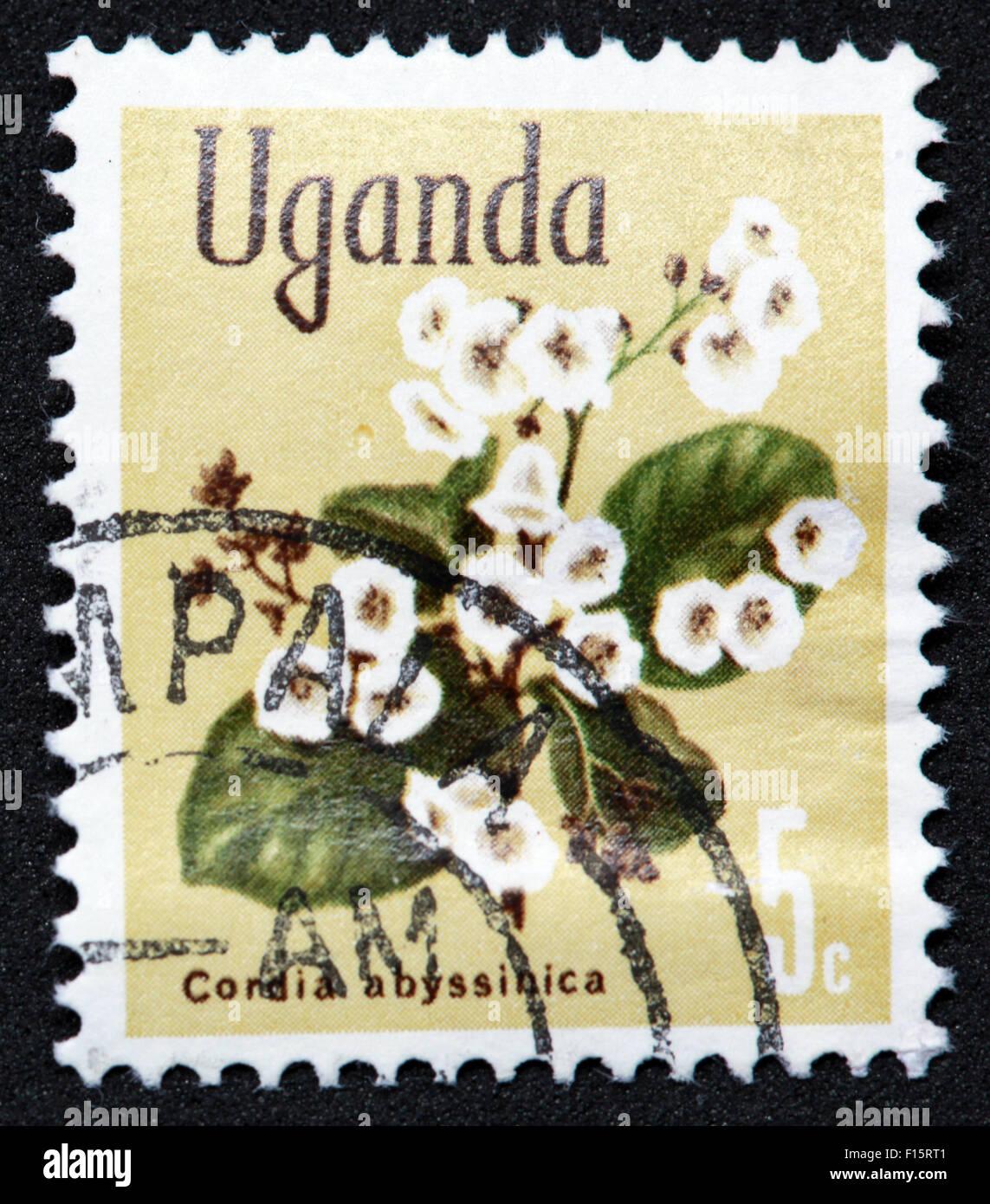 Uganda 5c plant flower Condia abyssinica Stamp - Stock Image