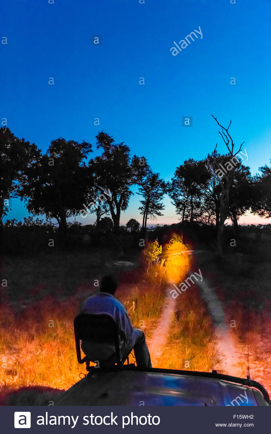 A tracker sits in a seat on the front of a safari vehicle and holds a spotlight looking for nocturnal animals on - Stock Image
