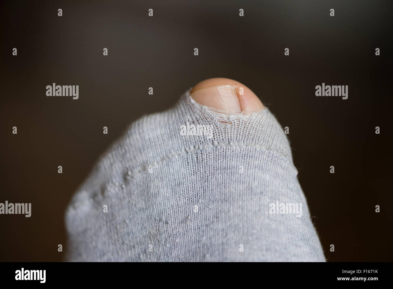 Big Toe of left foot coming through a little hole in a torn sock made of grey cotton - Stock Image