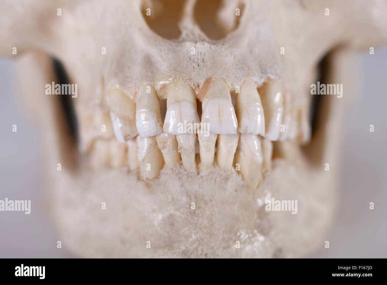 Detail of a human skull - Stock Image