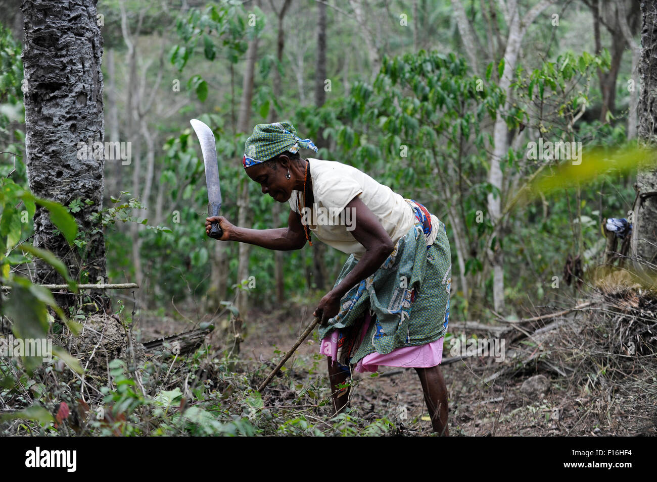 Africa ANGOLA Calulo, coffee fazienda of  Fernando Sobral, woman cleans the coffee farm from weeds - Stock Image