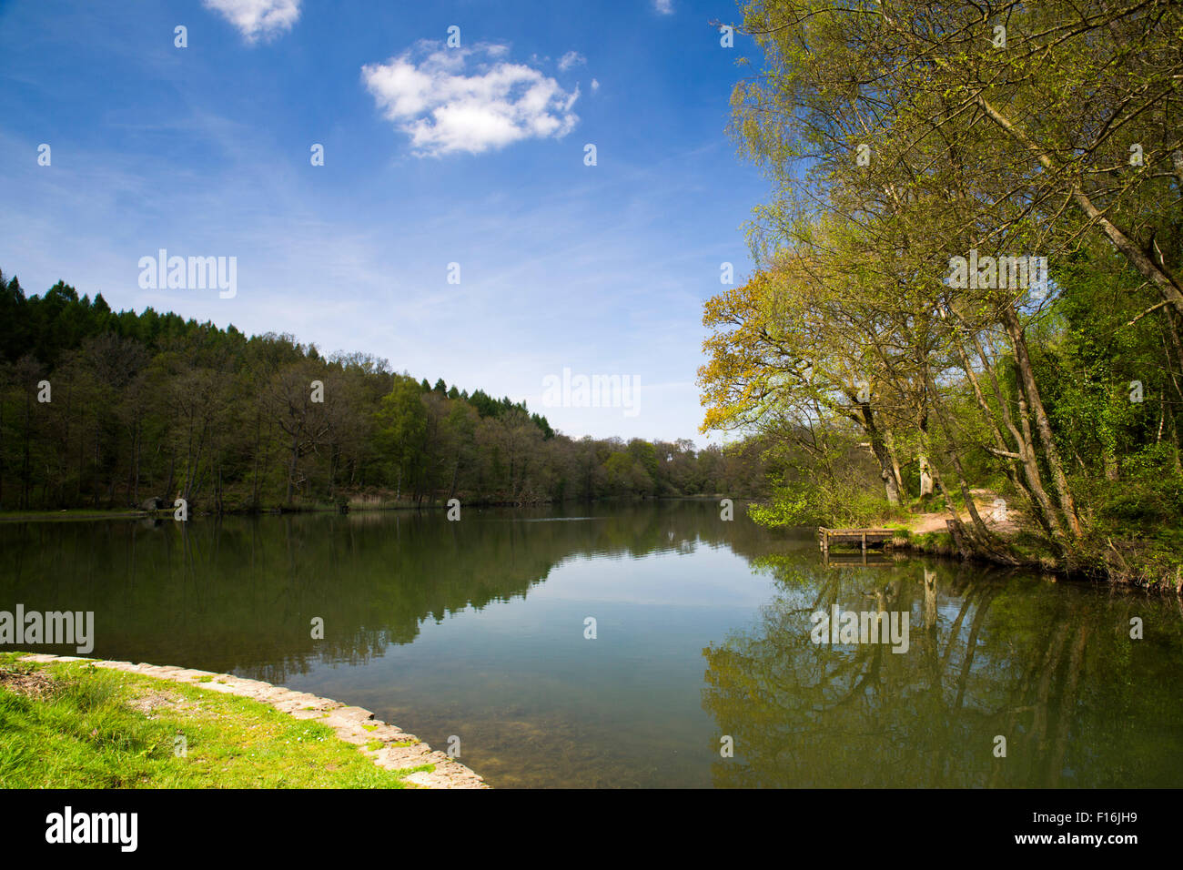 Cannop Ponds; Forest of Dean Gloucestershire; UK - Stock Image