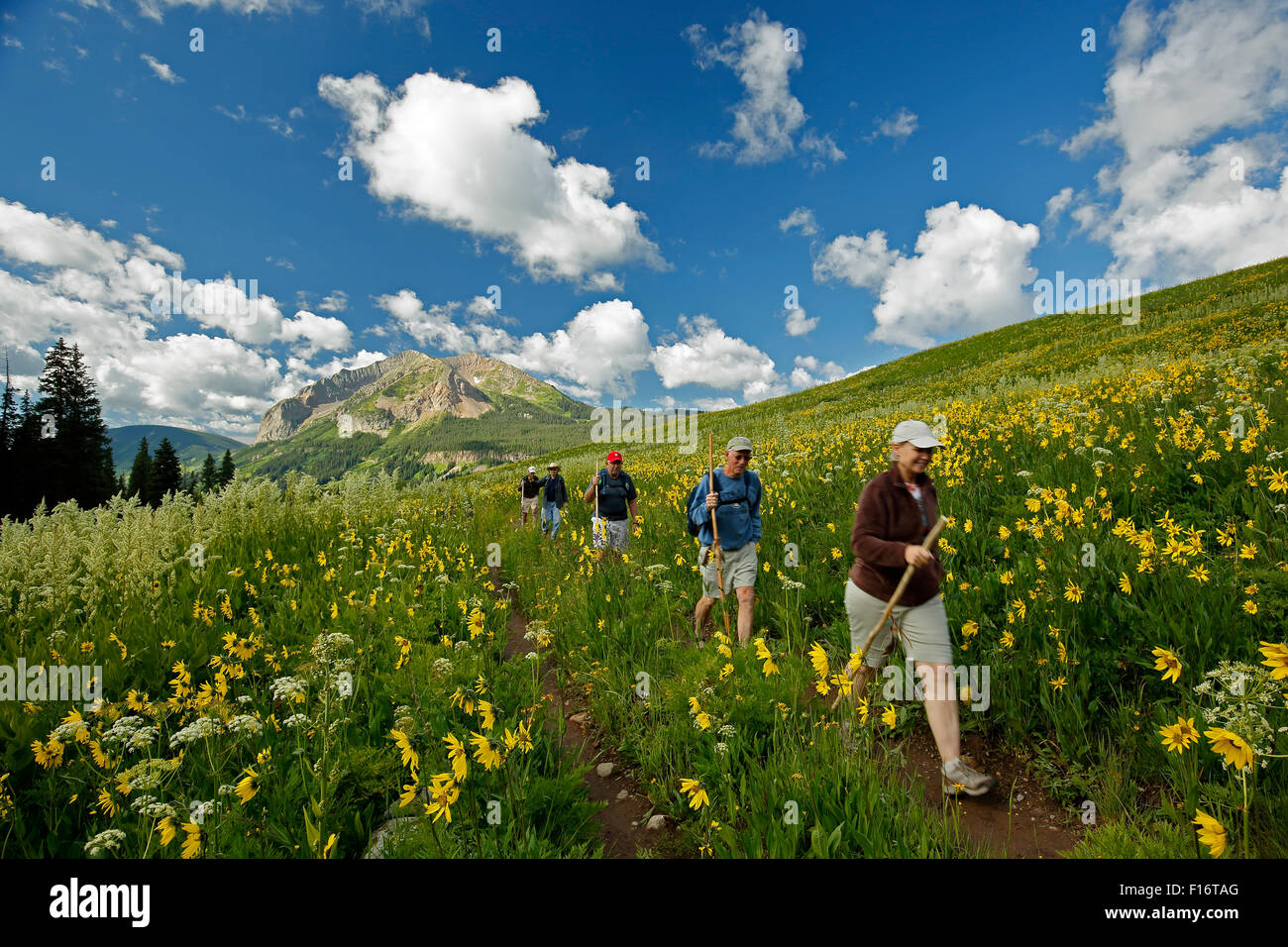 Hikers, wildflowers and Gothic Mountain (12,631 ft.), Rustler Gulch Trail, Gunnison National Forest, Crested Butte, - Stock Image