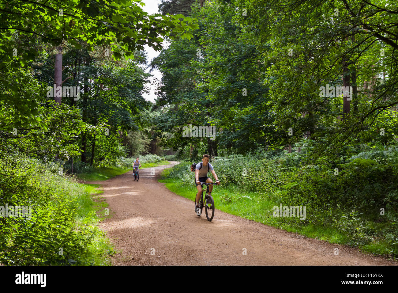 Cyclists on a trail through Thetford Forest, Norfolk, England, UK - Stock Image