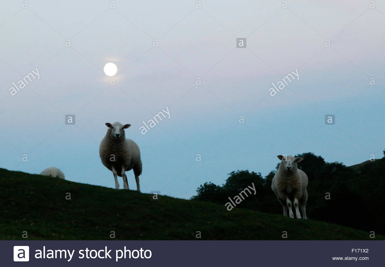 Holwick, Middleton-in-Teesdale, Co Durham, UK. 28th August 2015. In the North Pennine Hills and with a full moon - Stock Image